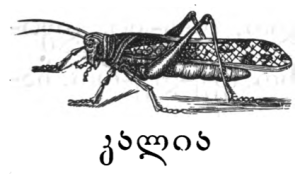 "With მკალი cf. this word, ""locust, grasshopper"" (იაკობ გოგებაშვილის დედა ენა, p. 16)."
